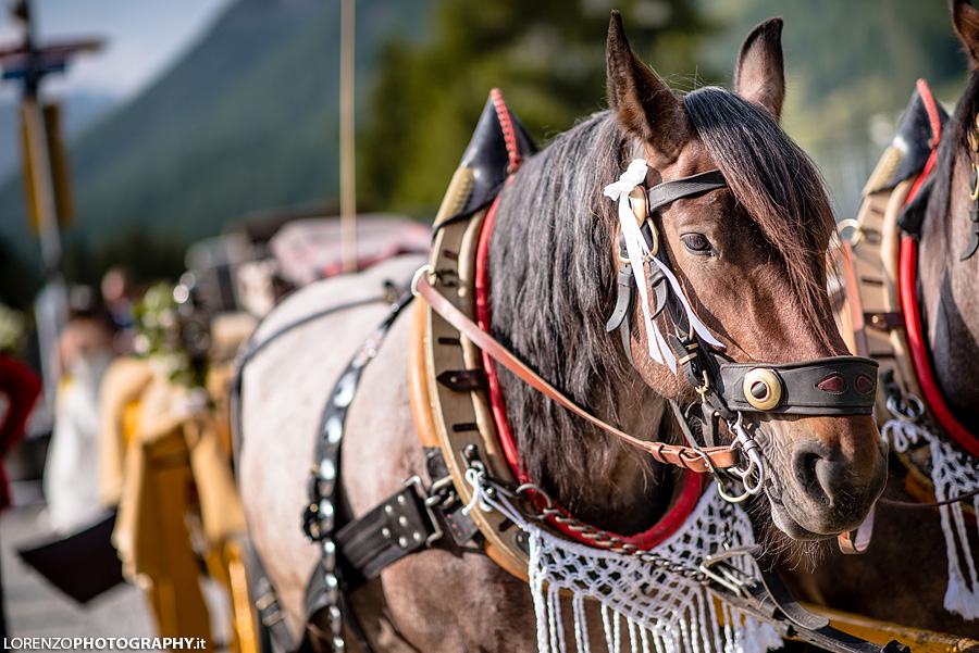 Carriage with Horse wedding